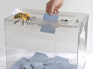 vote-abeille